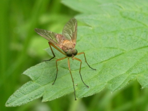mosquito-54605_640-resized-600
