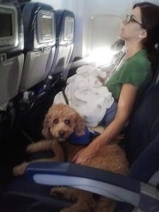 Service dog on a plane