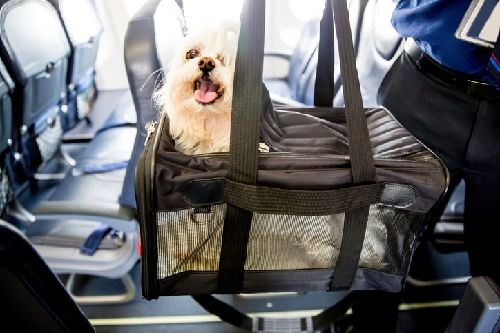 Traveling With Pets: How to Plan for the Unexpected