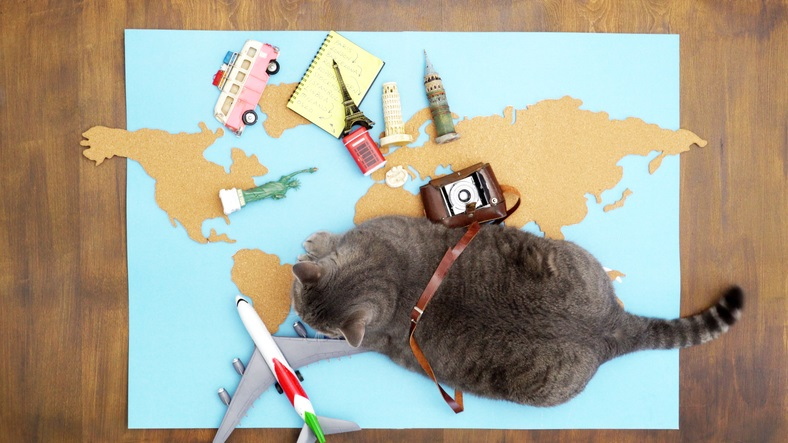 Traveling With Pets: Tips for a Safer (and Smoother) Trip Abroad